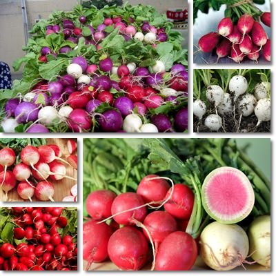 Properties and Benefits of Radishes