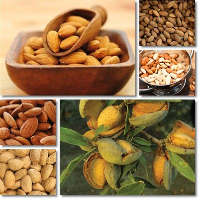 Properties and Benefits of Almonds