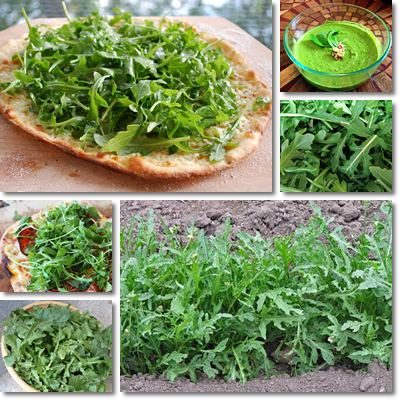 Properties and Benefits of Arugula