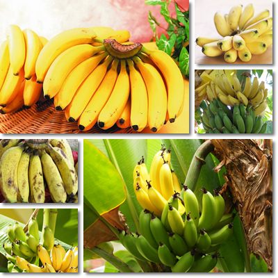 Properties and Benefits of Bananas