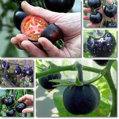 Properties and Benefits of Black Tomatoes