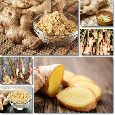 Properties and Benefits of Ginger