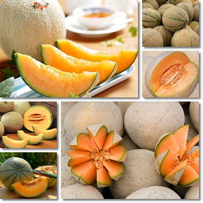 Properties and Benefits of Cantaloupe