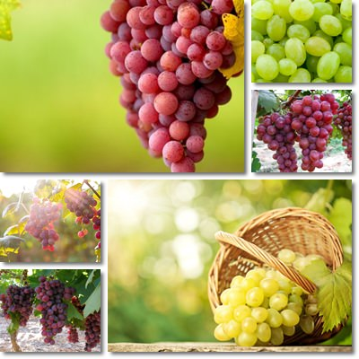 Properties and Benefits of Grapes