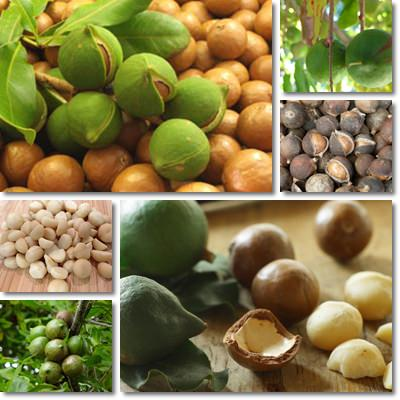 Properties and Benefits of Macadamia Nuts