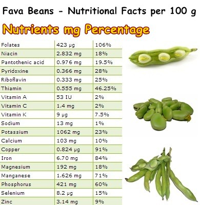 Nutritional Facts Fava Beans