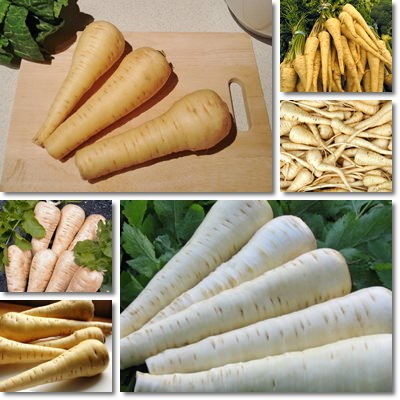 Properties and Benefits of Parsnip