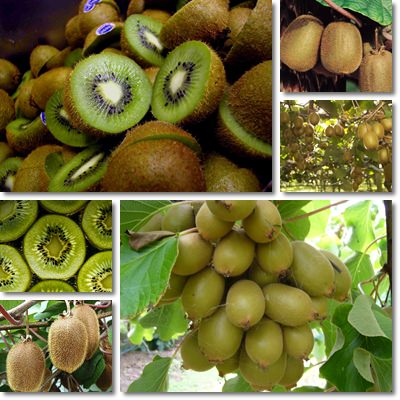 Properties and Benefits of Kiwifruit