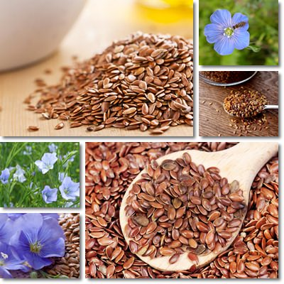 Properties and Benefits of Flax Seeds