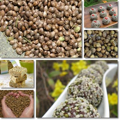 Properties and Benefits of Hemp Seeds