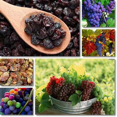 Properties and Benefits of Raisins