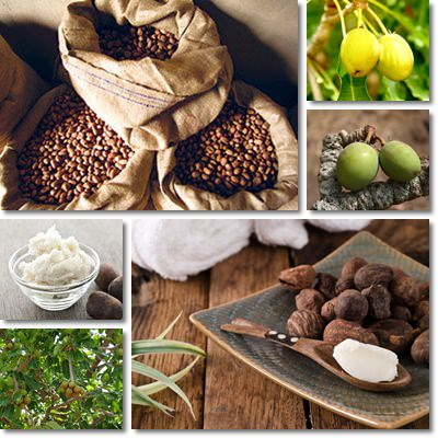 Properties and Benefits of Shea Nut