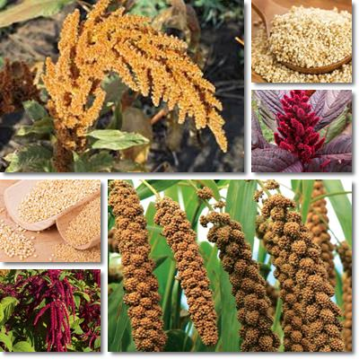 Properties and Benefits of Amaranth