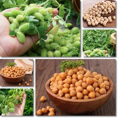 Properties and Benefits of Chickpeas