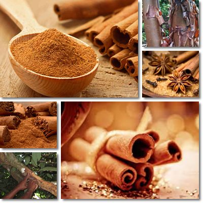 Properties and Benefits of Cinnamon
