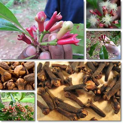 Properties and Benefits of Cloves