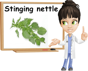 Nettle benefits