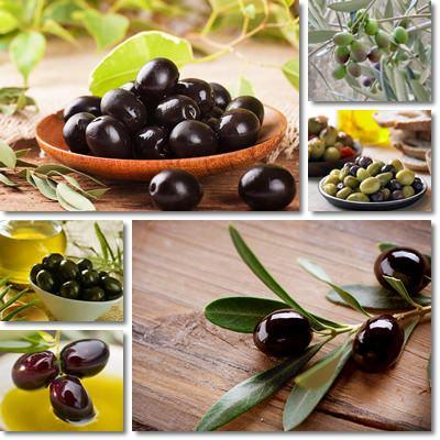 Properties and Benefits of Olives
