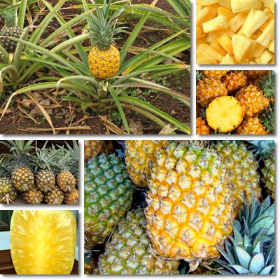 Properties and Benefits of Pineapple