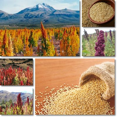 Properties and Benefits of Quinoa