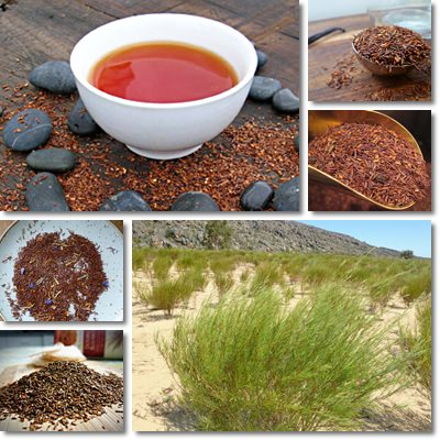Properties and Benefits of Rooibos