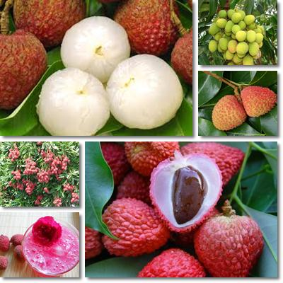 Properties and Benefits of Lychee, Litchi