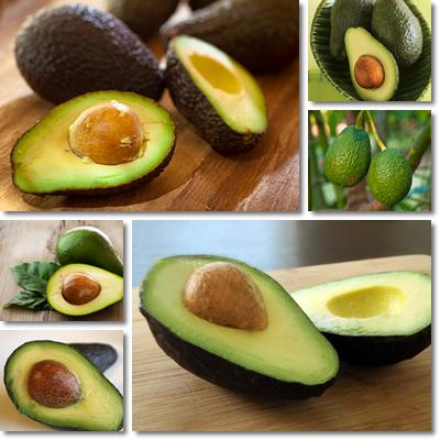 Properties and Benefits of Avocado