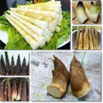 Properties and Benefits of Bamboo Shoots