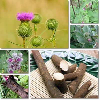 Properties and Benefits of Burdock Root