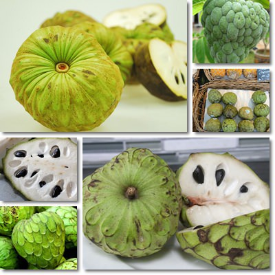 Properties and Benefits of Cherimoya