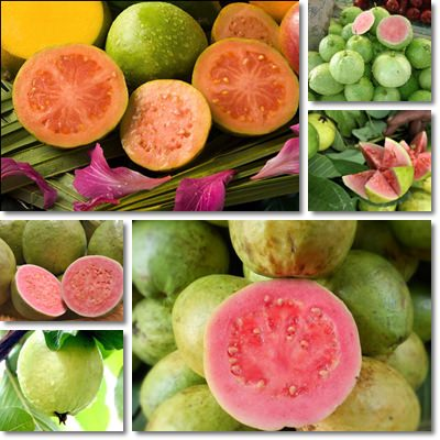 Properties and Benefits of Guava