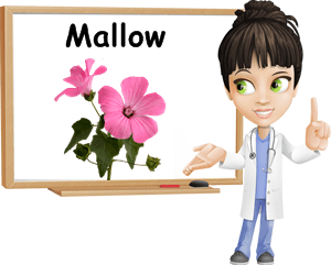 Mallow benefits
