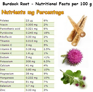 Nutritional Facts Burdock
