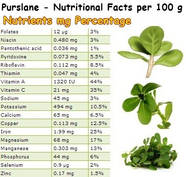Nutritional Facts Purslane