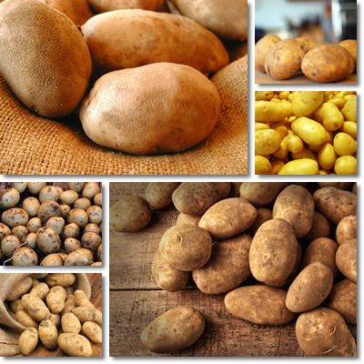 Properties and Benefits of Potatoes