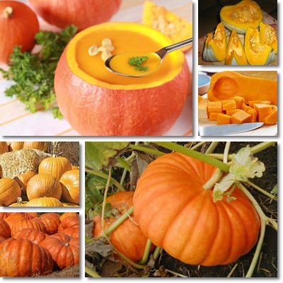 Properties and Benefits of Pumpkin