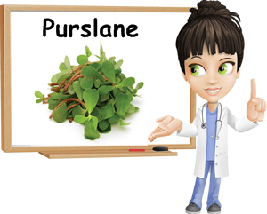 Purslane benefits