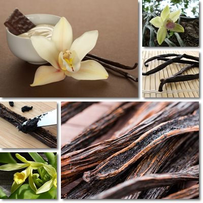 Properties and Benefits of Vanilla