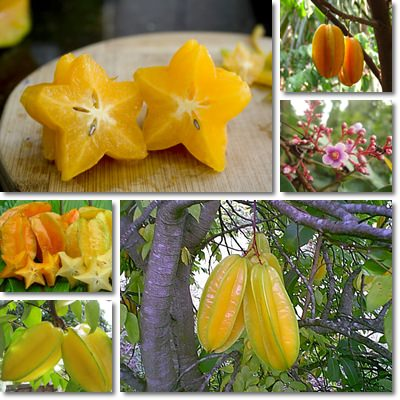 Properties and Benefits of Carambola