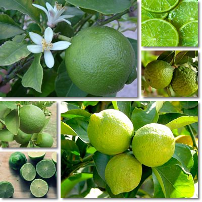 Properties and Benefits of Lime
