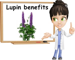 Lupin benefits