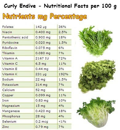 Nutritional Facts Curly Endive
