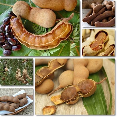 Properties and Benefits of Tamarind