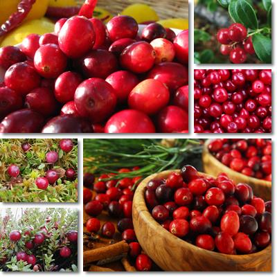 Properties and Benefits of Cranberries