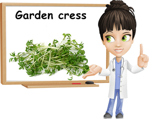 Garden cress benefits