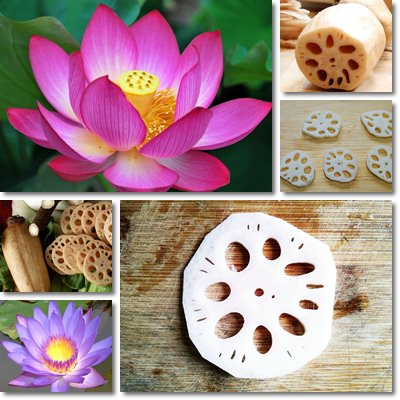 Properties and Benefits of Lotus Root