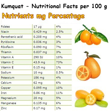 Nutritional Facts Kumquat