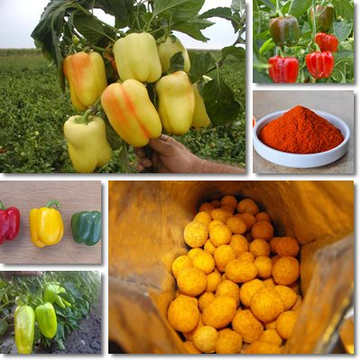 Properties and Benefits of Paprika
