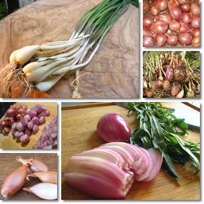 Properties and Benefits of Shallots