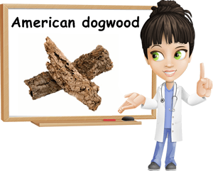 American dogwood bark benefits